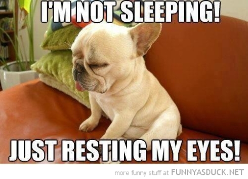 funny-tired-puppy-dog-not-sleeping-resting-eyes-pics